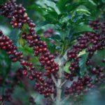 coffee-2540266_1920